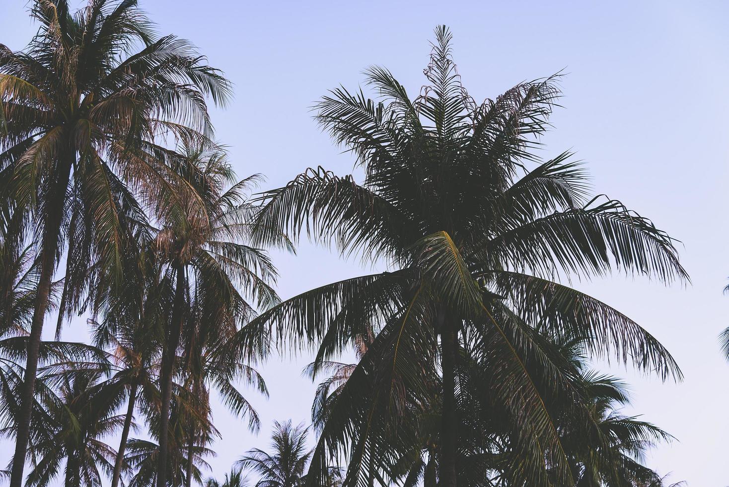 silhouette de palmiers photo