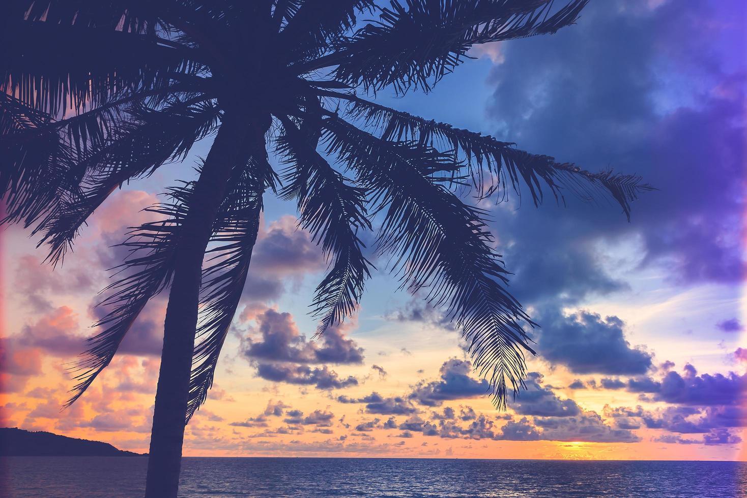 silhouette d & # 39; un palmier photo