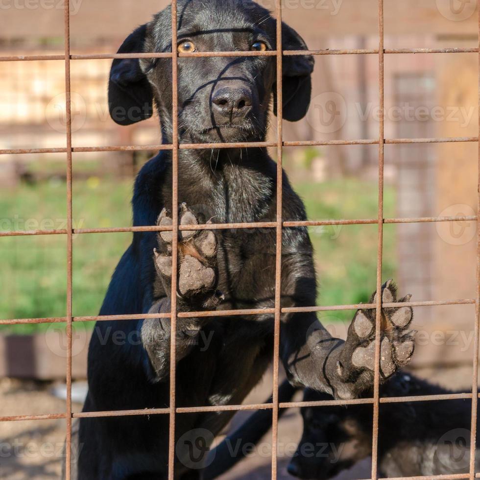 chiot noir derrière une clôture photo