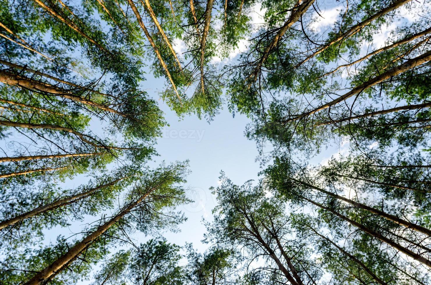 cercle d'arbres photo