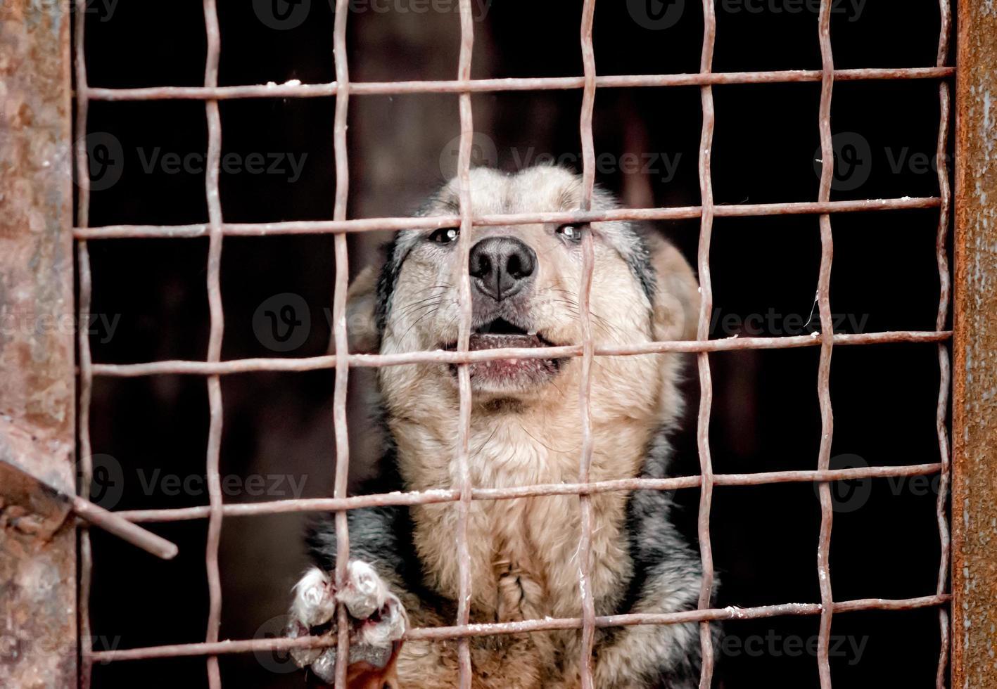 chien derrière une clôture photo