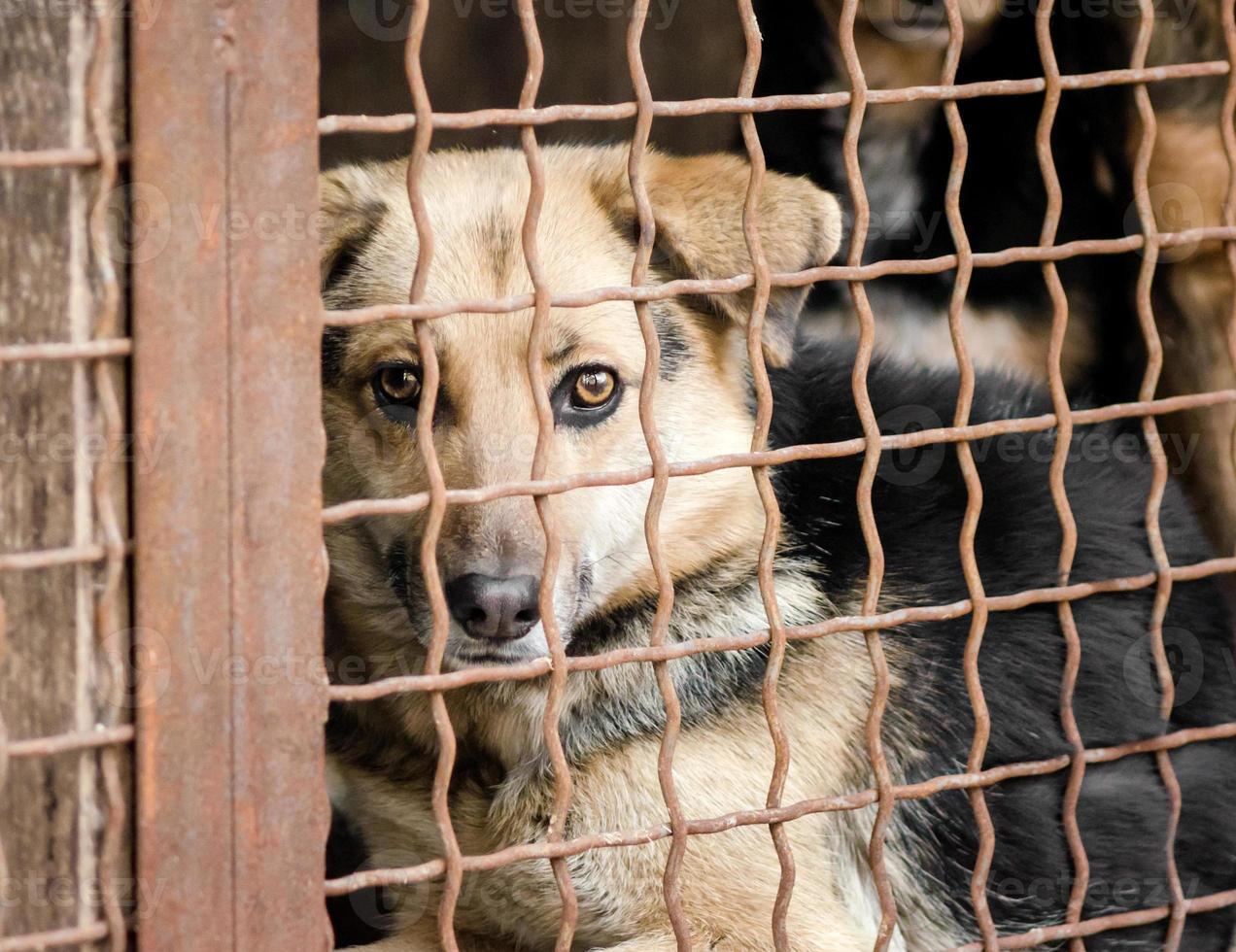 chien brun derrière une clôture photo