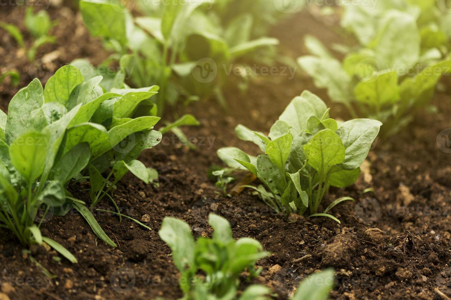 plantes à grand angle avec des feuilles vertes photo