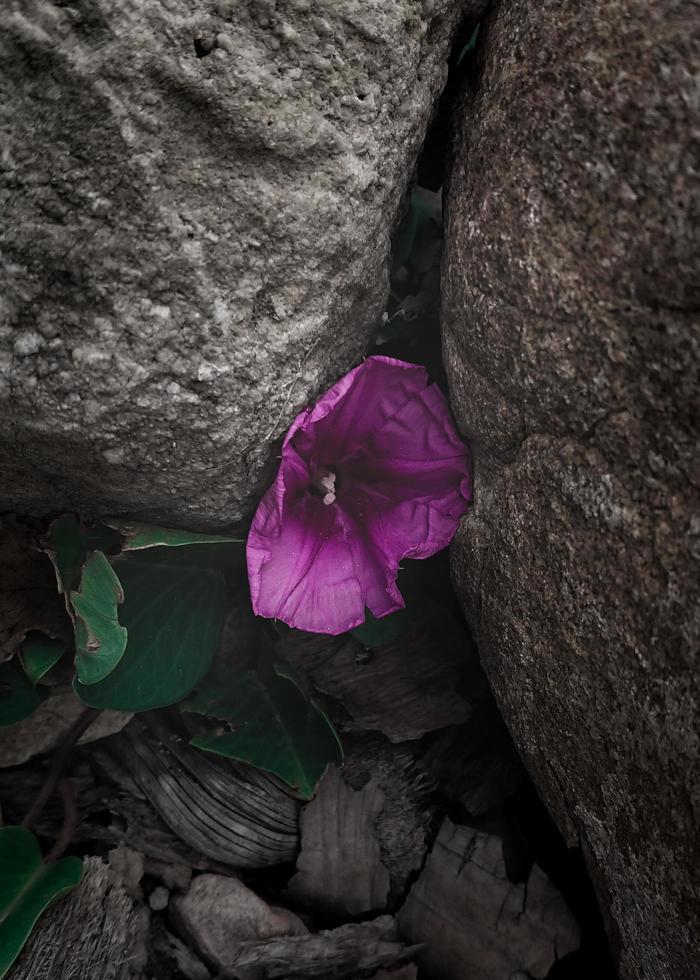 fleur forte survivant dans la crevasse photo