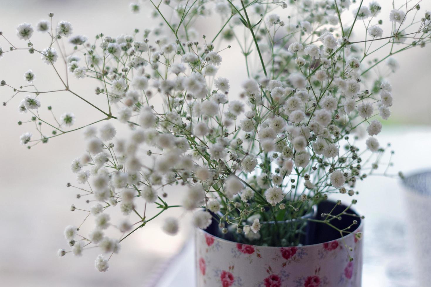 petites fleurs blanches souffle de bébé photo