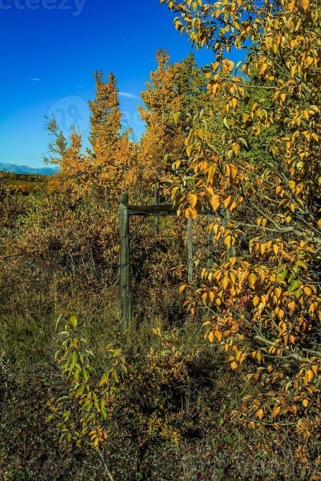 feuilles d'automne et une clôture photo