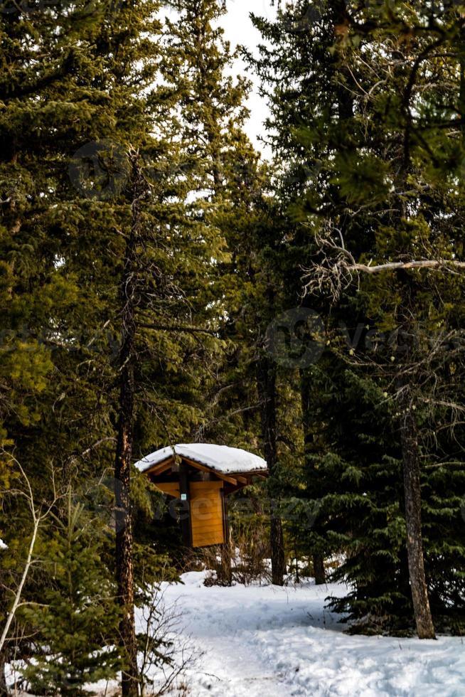 abri dans une forêt photo