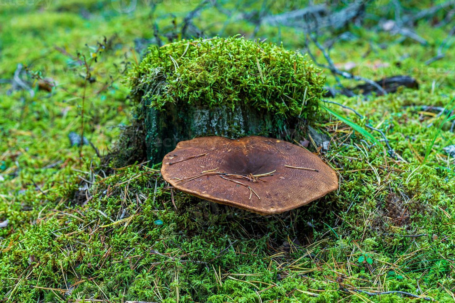 souche d'arbre moussue photo