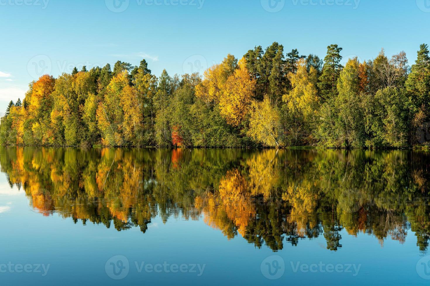 reflet d'arbre dans l'eau photo