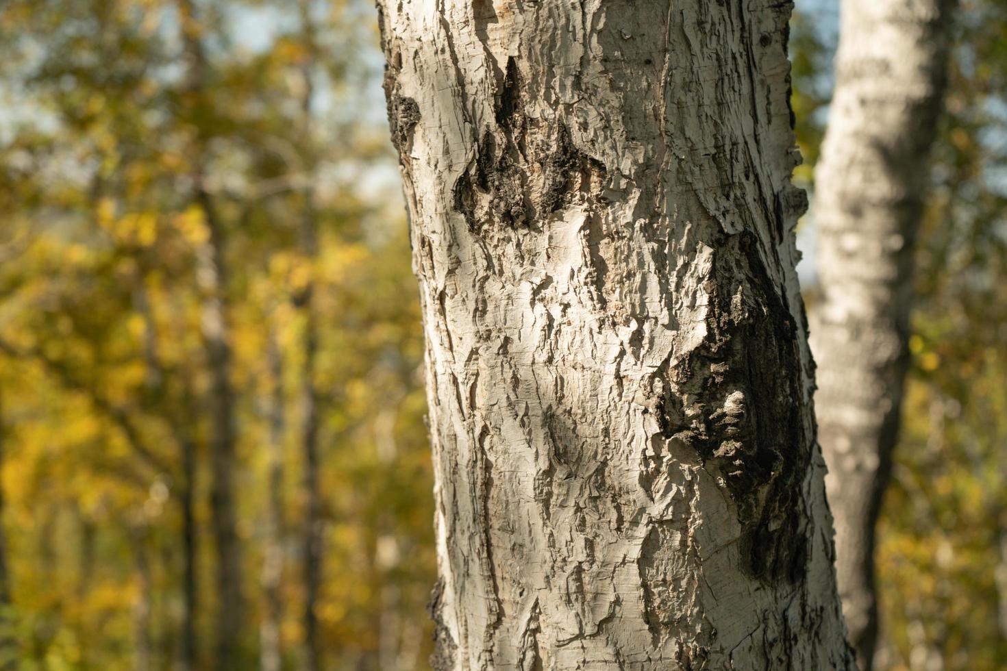 fond naturel avec vue sur un tronc d'arbre photo