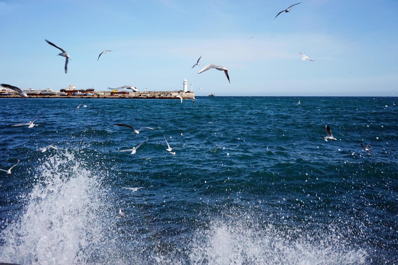 paysage marin avec vue sur le phare et les goélands. photo