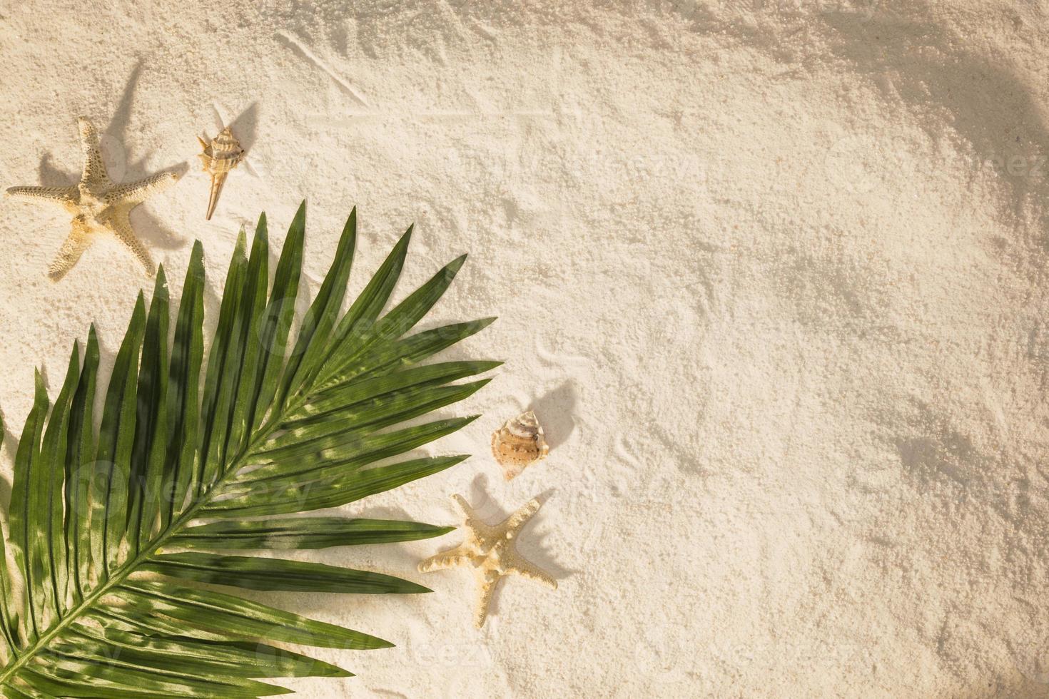 feuille de palmier sur le sable photo