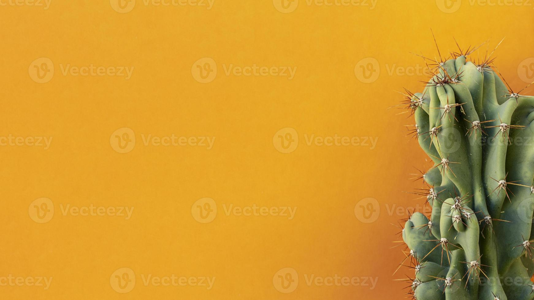 cactus sur fond orange photo