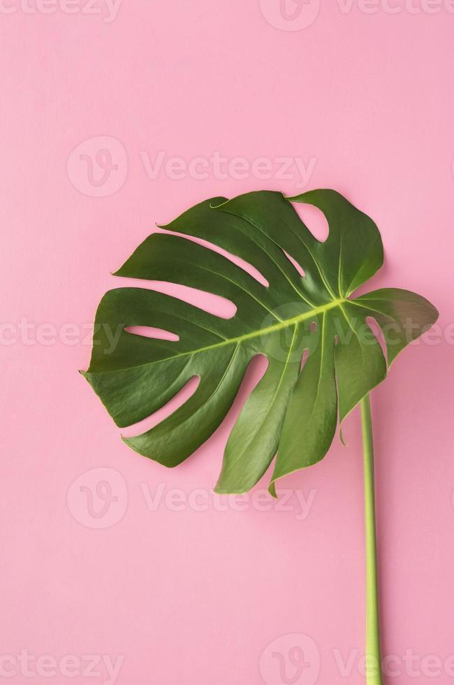 vue de dessus composition de plantes tropicales minimales photo