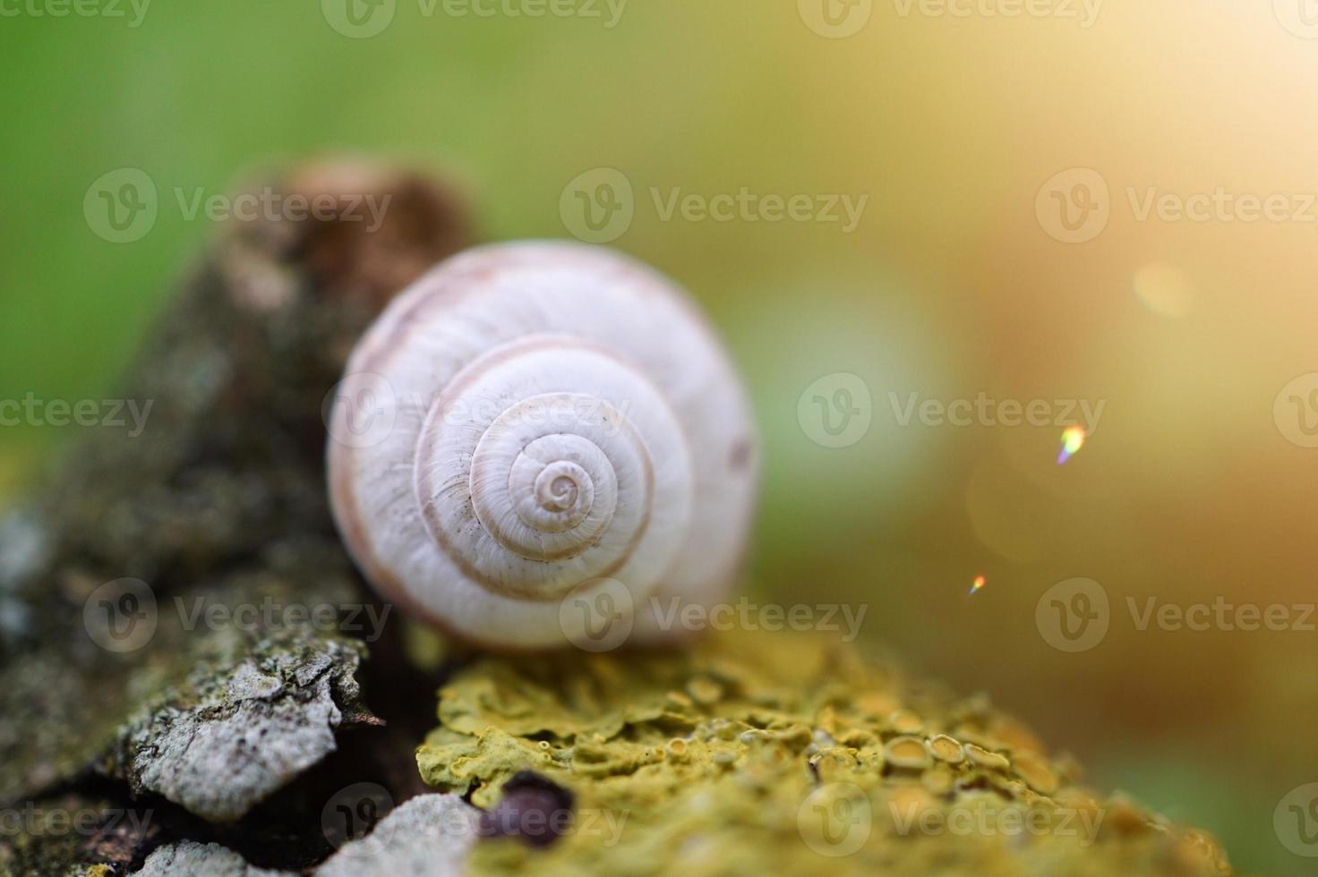 petit escargot blanc dans la nature photo