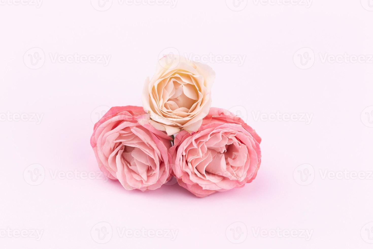 trois roses délicates sur un beau fond rose avec un espace pour le texte photo