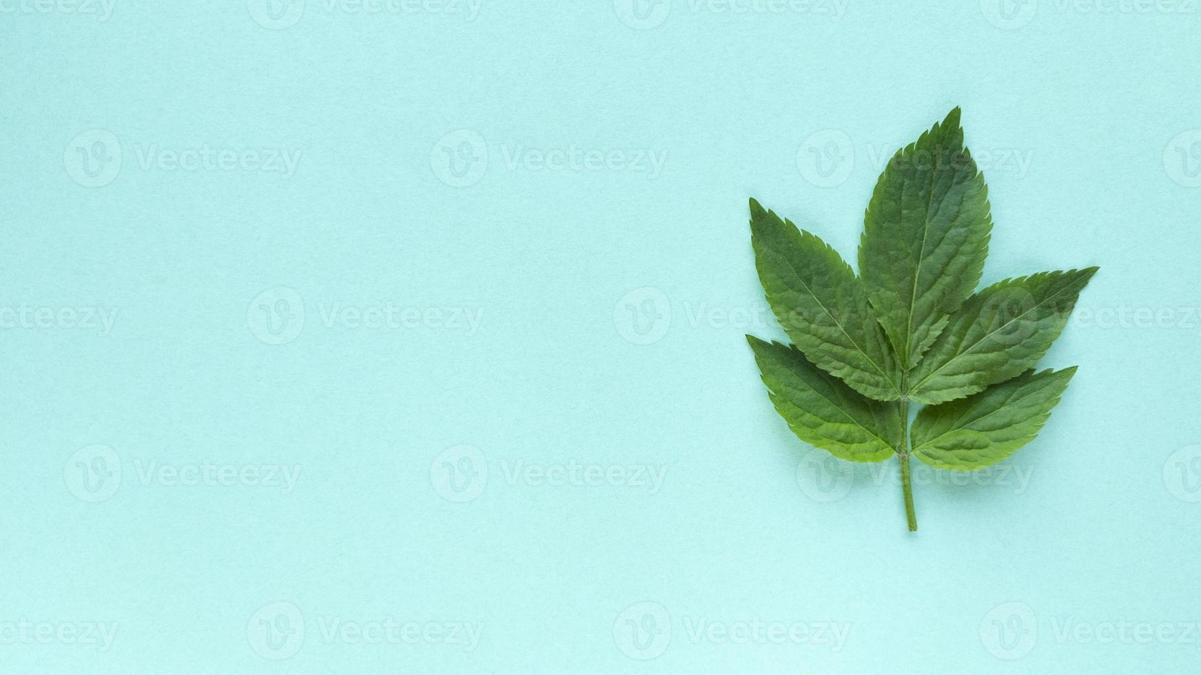 Grean Feuilles Sur Fond Turquoise Simple Plat Poser Avec Texture Pastel Et Copie Espace Mode Eco Concept Photo