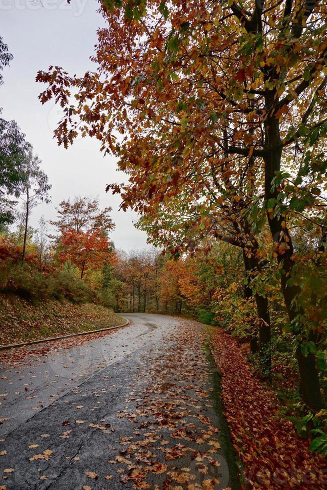 route avec des arbres bruns en automne photo
