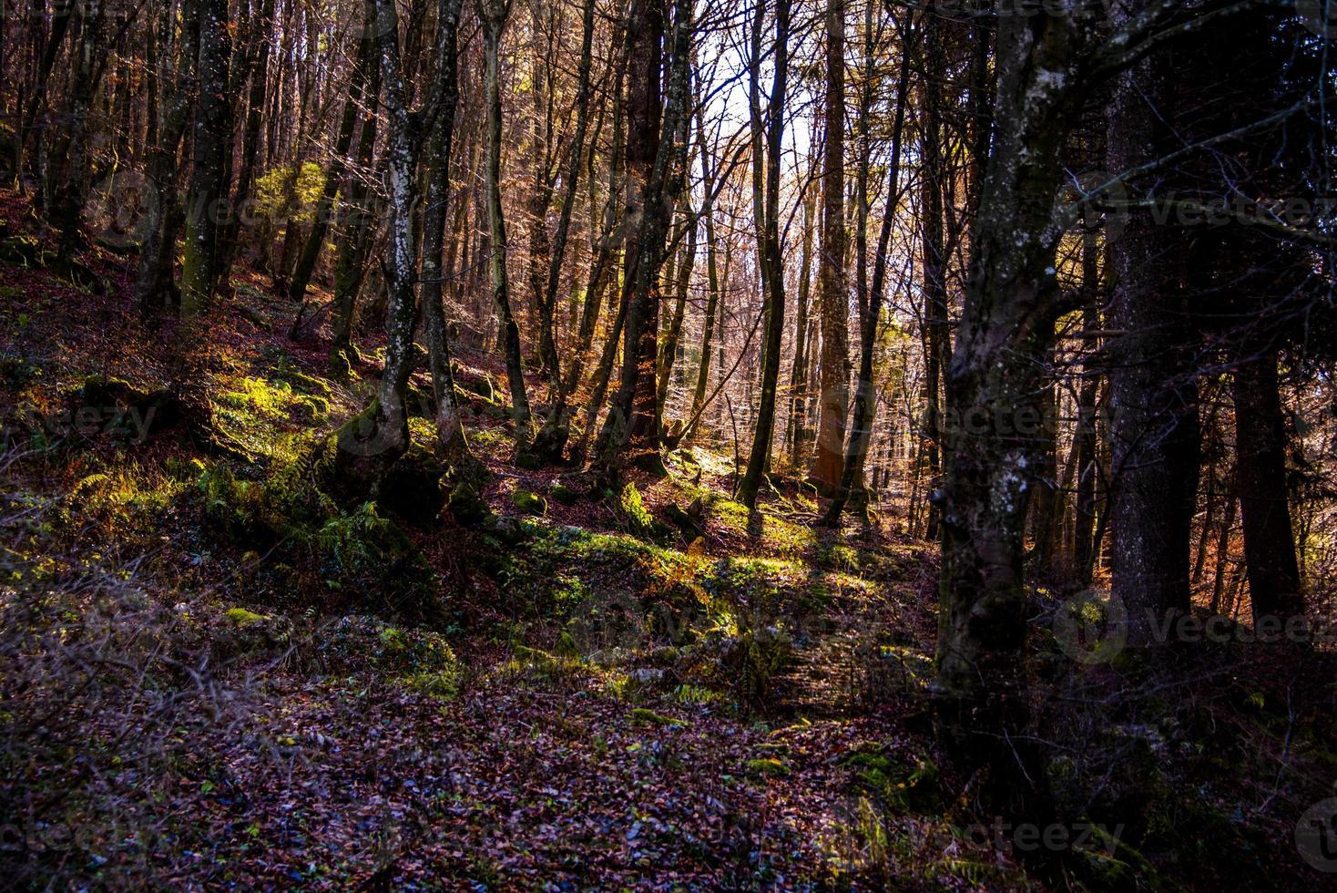 soleil filtrant à travers les bois photo