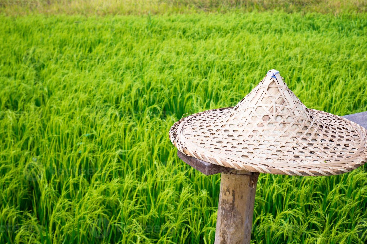 chapeau de paille dans un champ de blé photo
