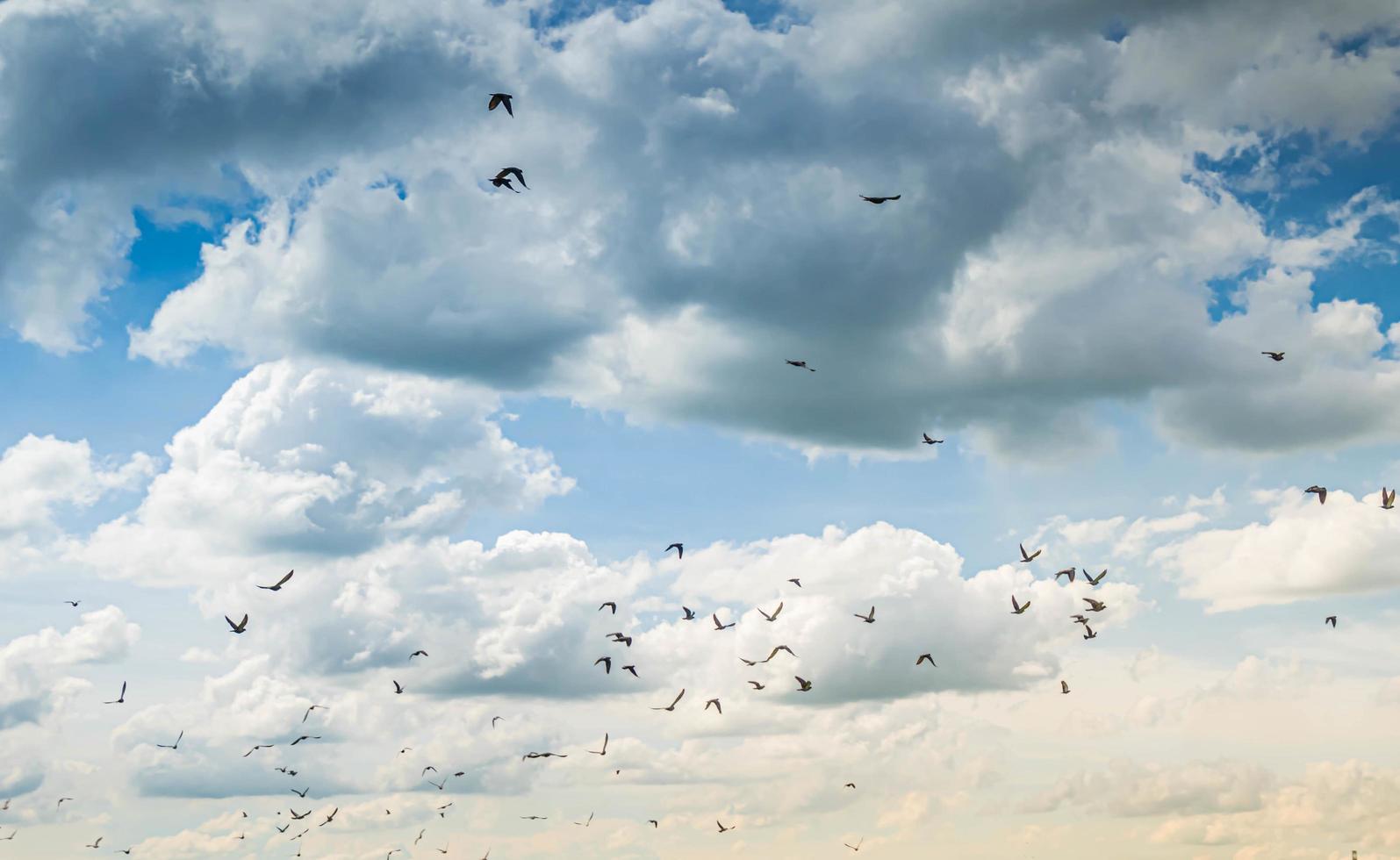 ciel coucher de soleil à la poussière avec des oiseaux photo