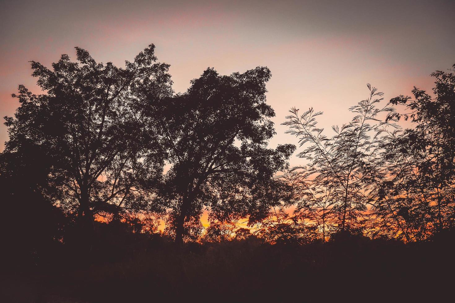 ciel dramatique coloré forêt silhouette coucher de soleil photo