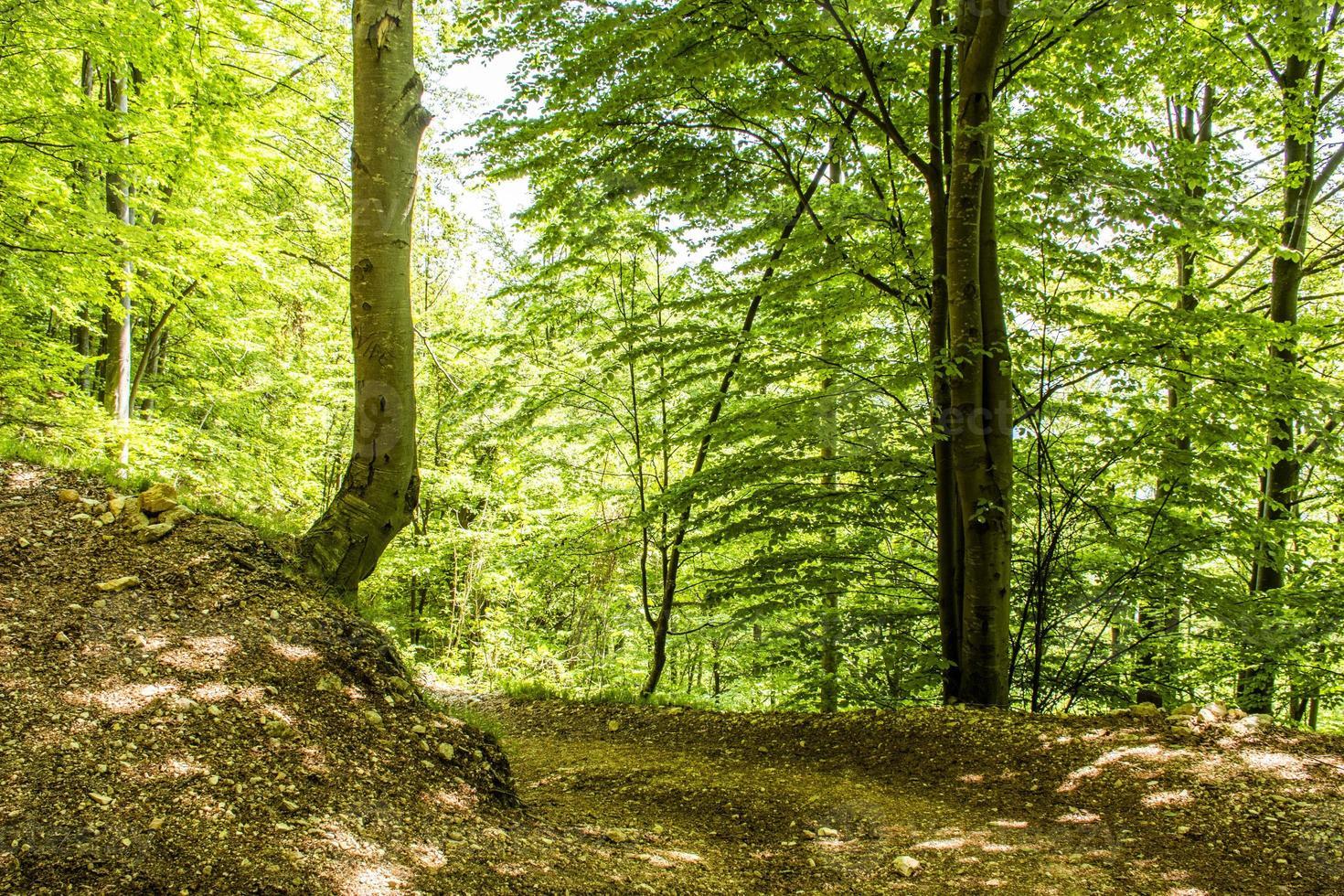 chemin de montagne en forêt photo