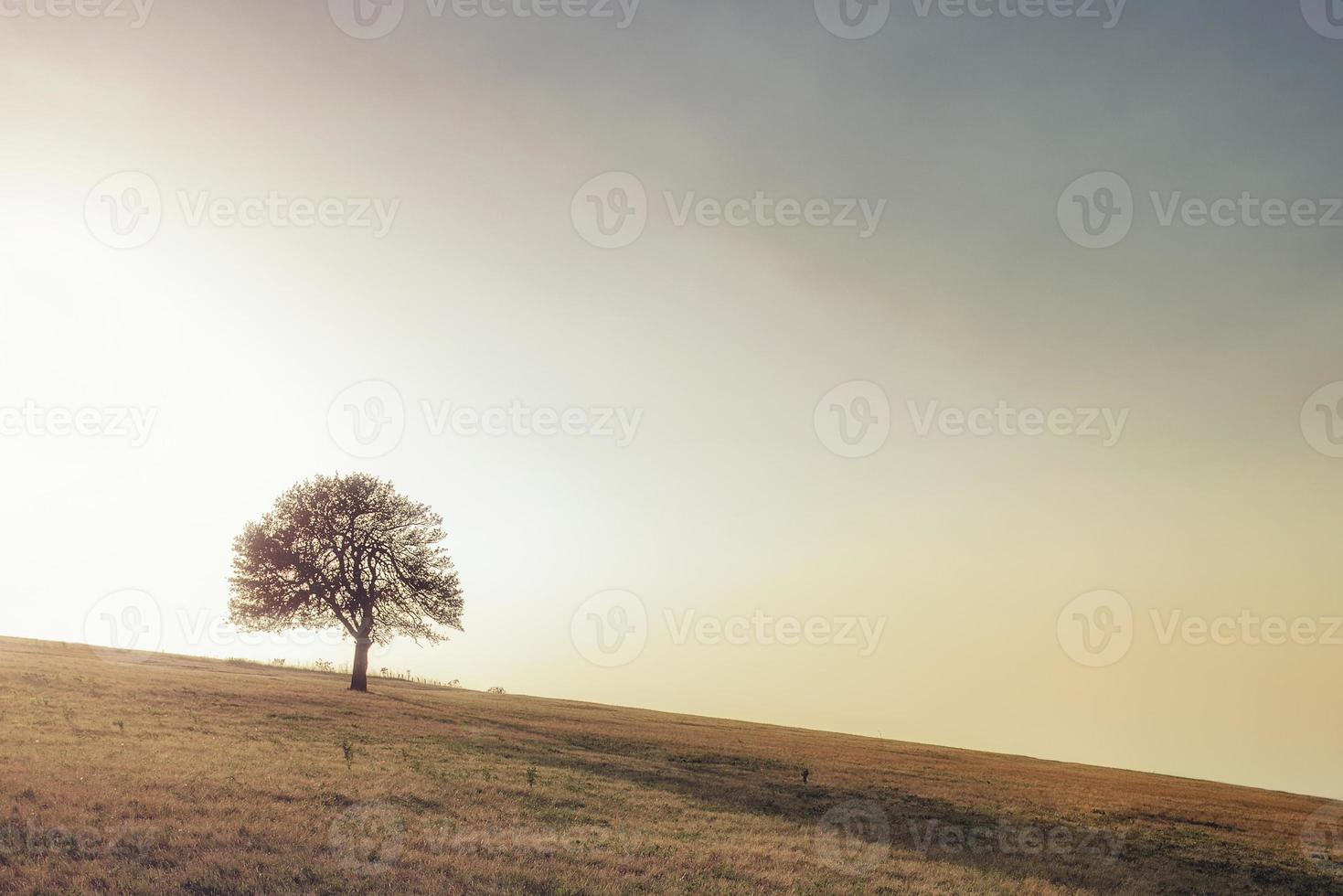 seul arbre sur le pré. seul arbre capturé sur le pré à mountain rajac, serbie. photo