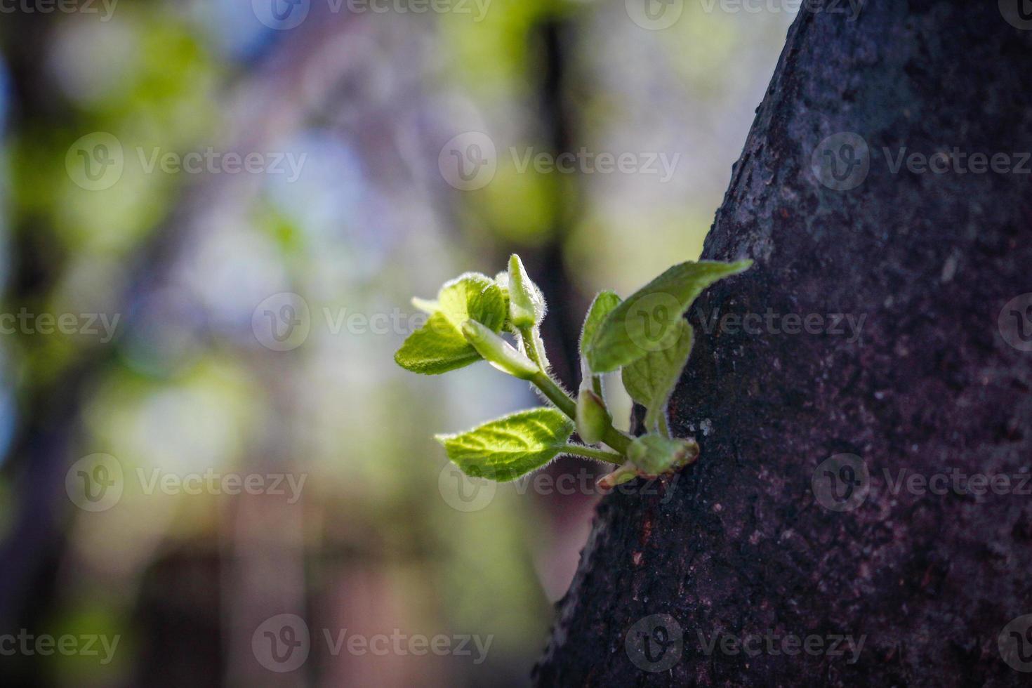 Jeune brindille verte poussant sur tronc d'arbre photo