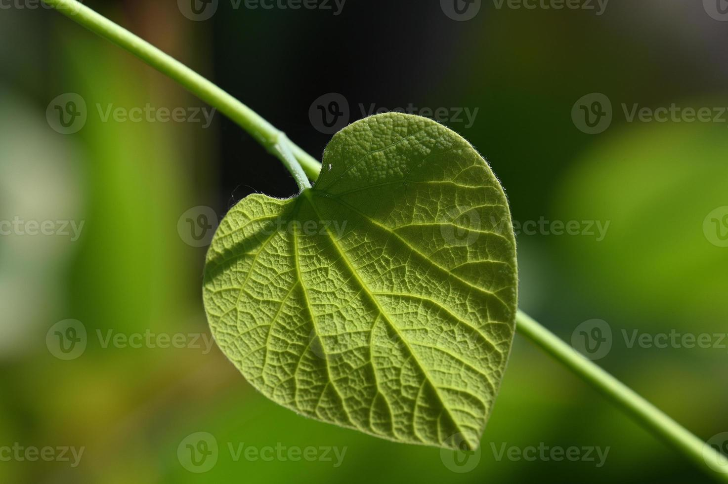 feuille verte ensoleillée photo