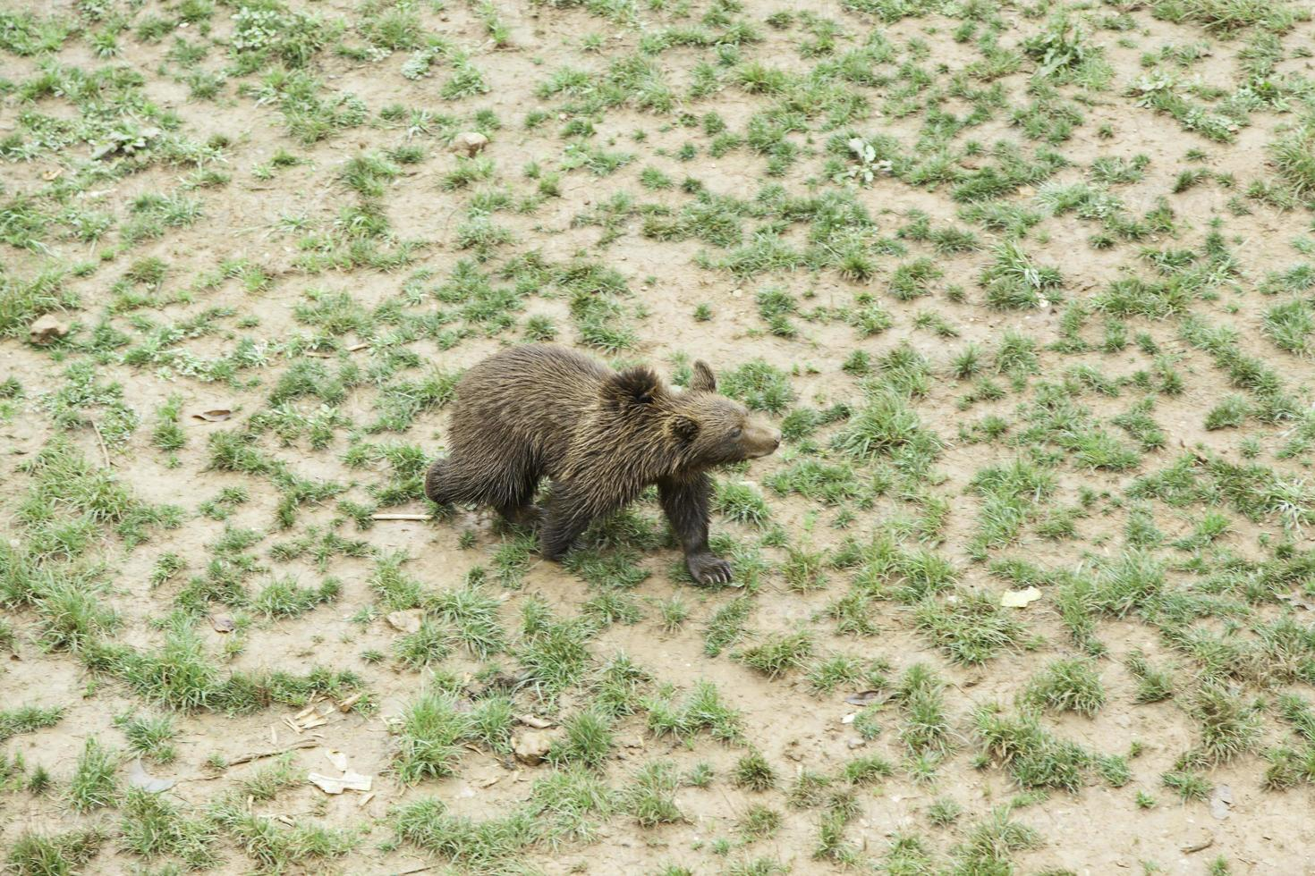 ours au zoo photo