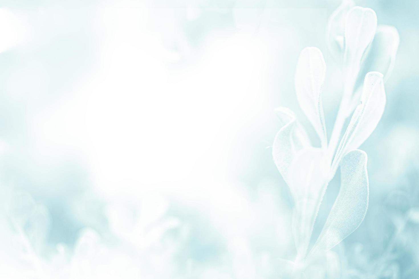 bleu vert belle fleur de printemps fond de branche avec espace de copie gratuit pour la carte de voeux ou la page de couverture de l'environnement, le modèle, la bannière Web et l'en-tête. photo
