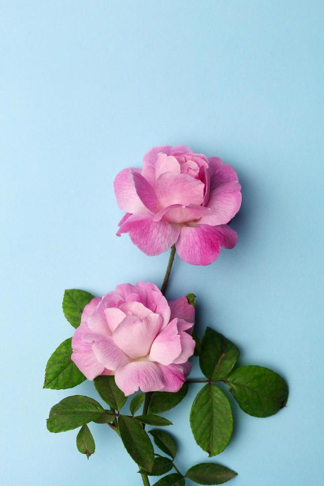 carte de maquette vide avec des fleurs et des plantes photo