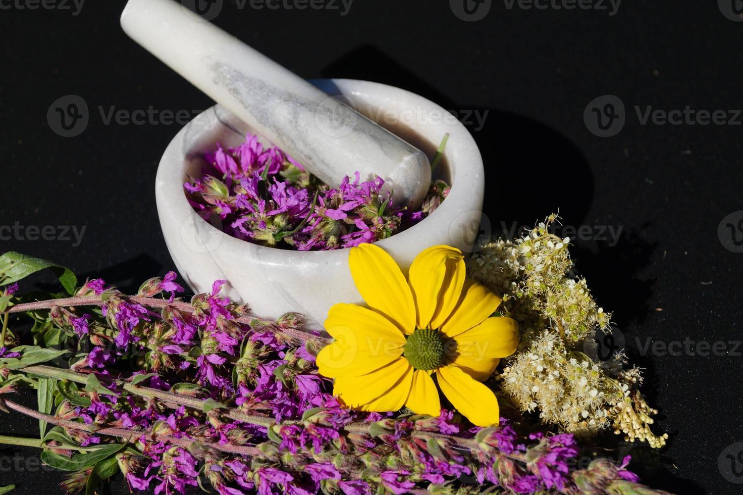 salicaire - lythrum salicaria photo
