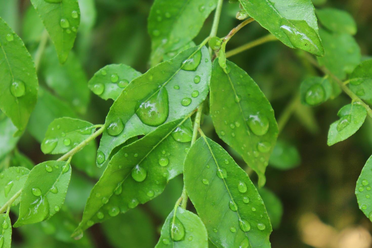petite plante à feuilles de curry photo