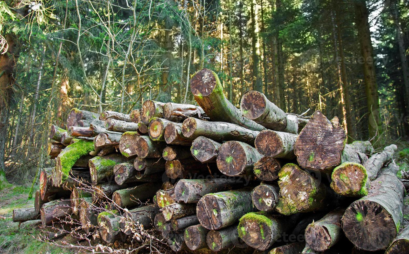 tronc de bois coupé en forêt dans la nature photo