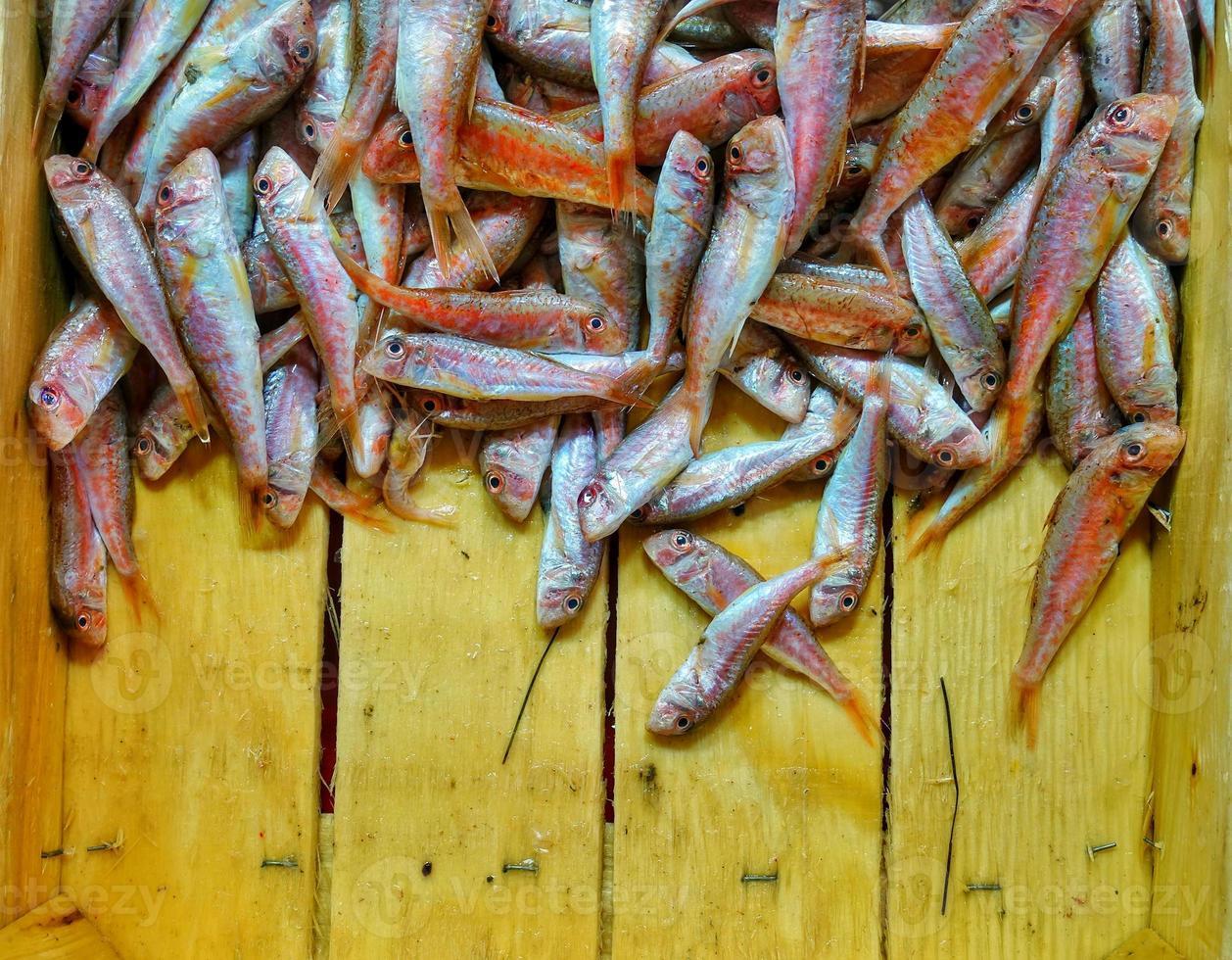 nourriture pour poissons dans un stand de marché aux poissons photo