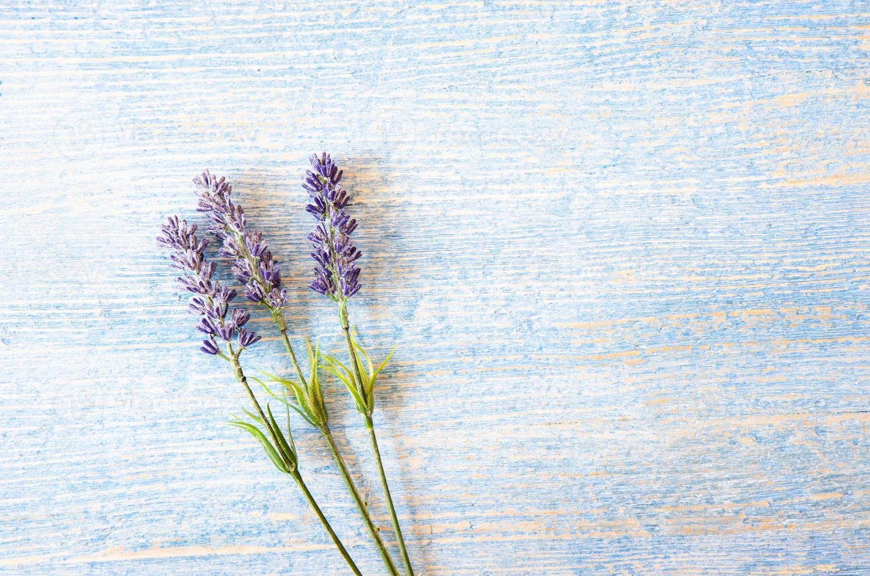 fleurs de lavande sur fond de bois bleu photo