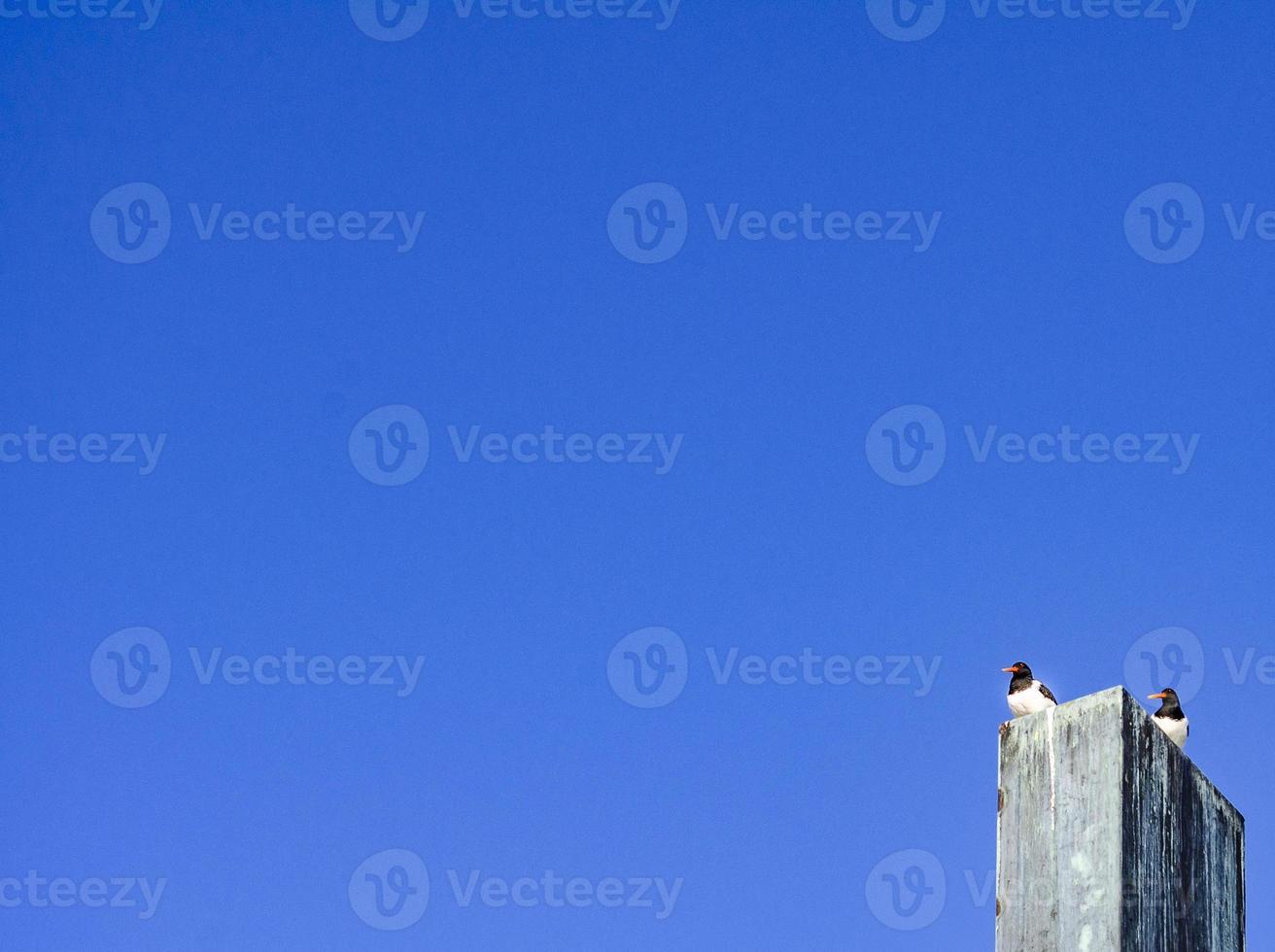 des oiseaux sont assis sur le monument. photo