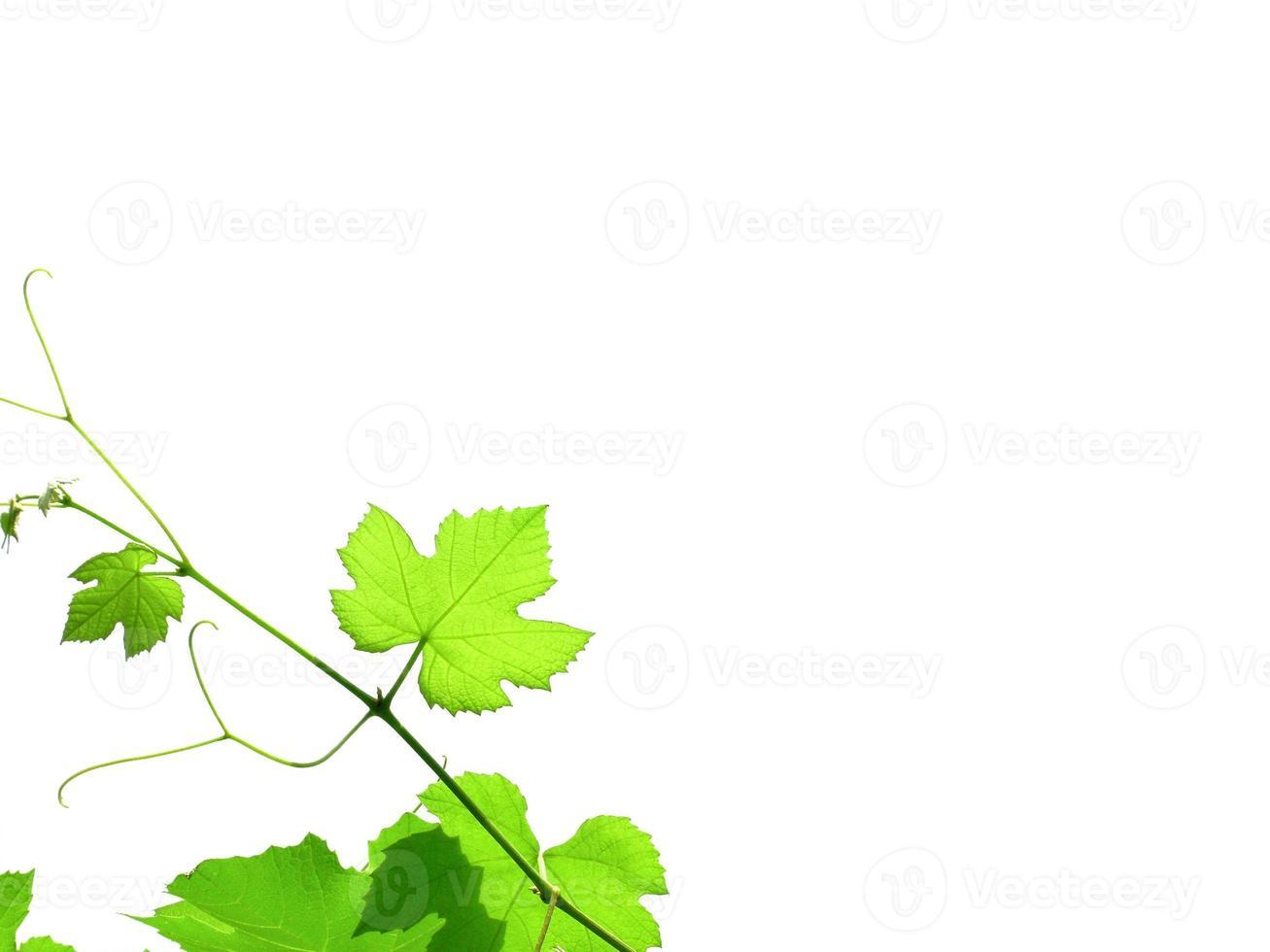 vigne avec espace de copie photo