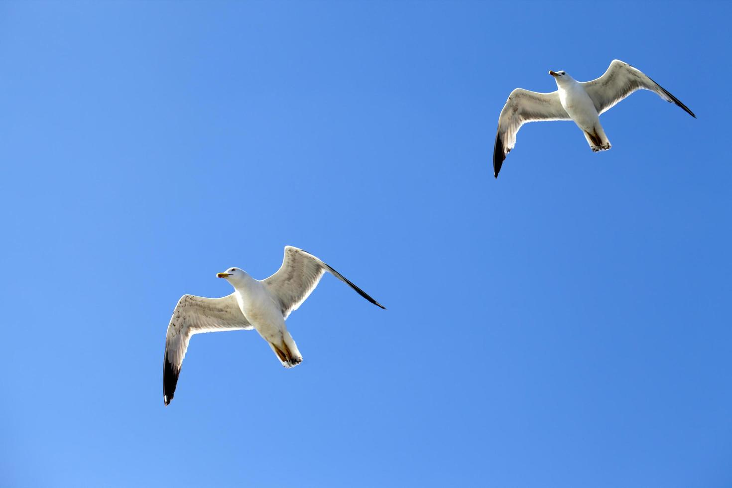 animal oiseau mouette volant sur le ciel photo