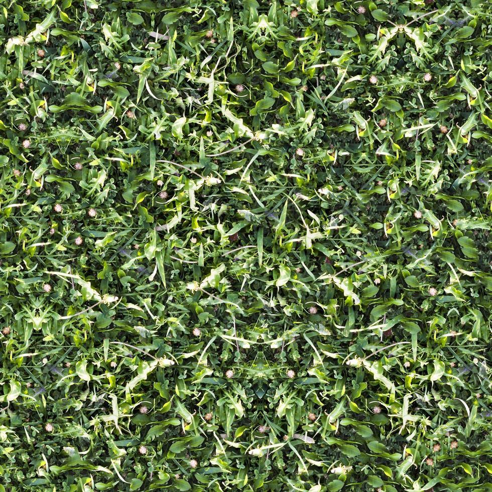 texture du sol d'herbe verte transparente photo