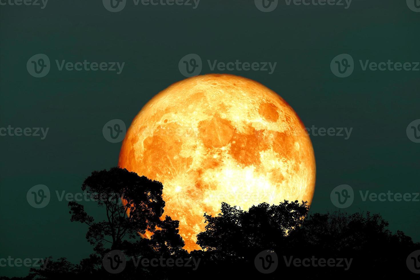 pleine lune de sang de récolte et arbre supérieur de silhouette sur le ciel nocturne photo