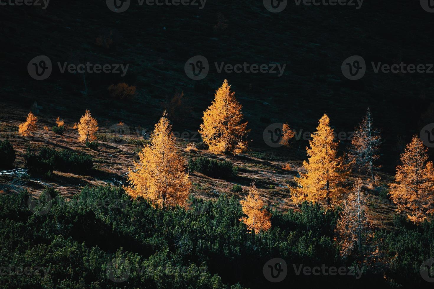 clair soleil sombre entre mélèzes et pins en automne photo