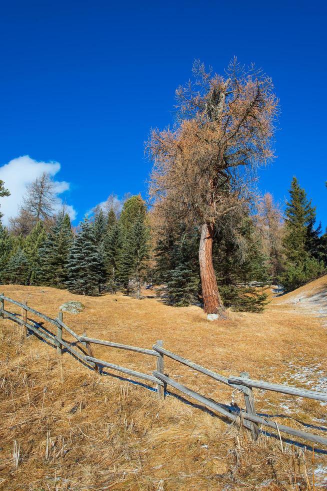 clôture en bois dans les montagnes avec mélèze photo