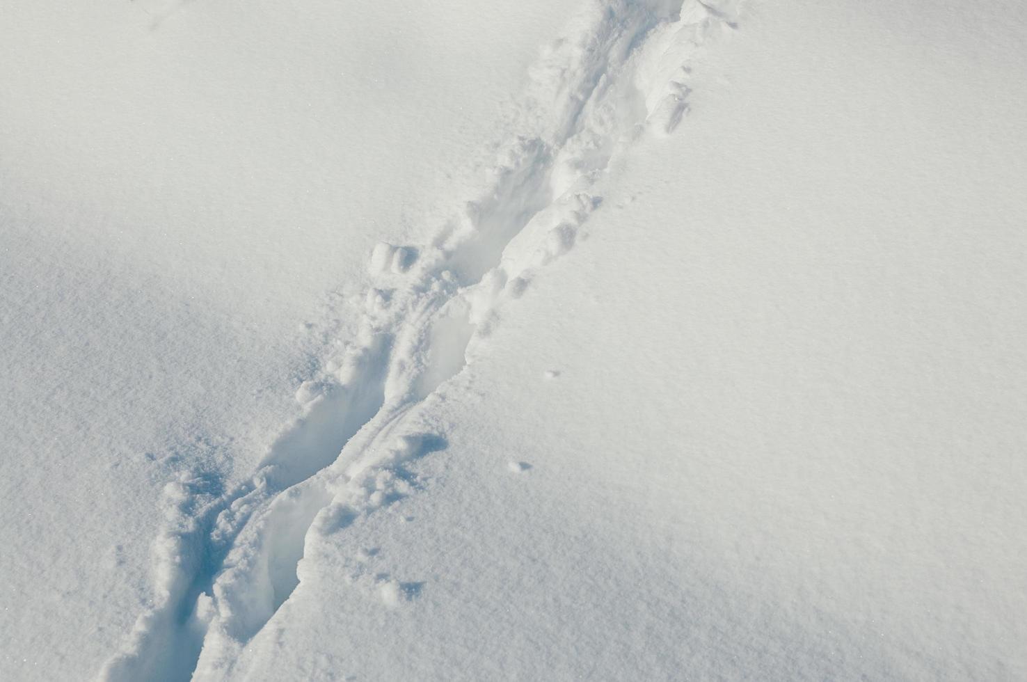 empreintes d'animaux dans la neige profonde photo