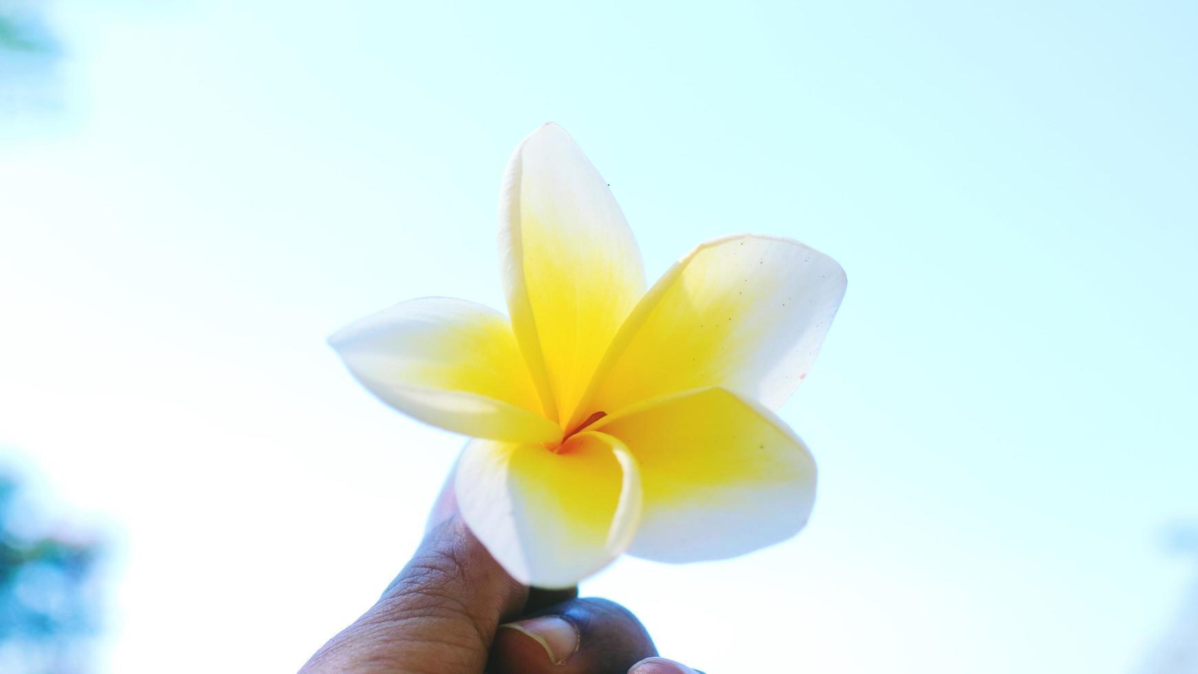 fleur tenue par quelqu'un avec un fond de ciel photo