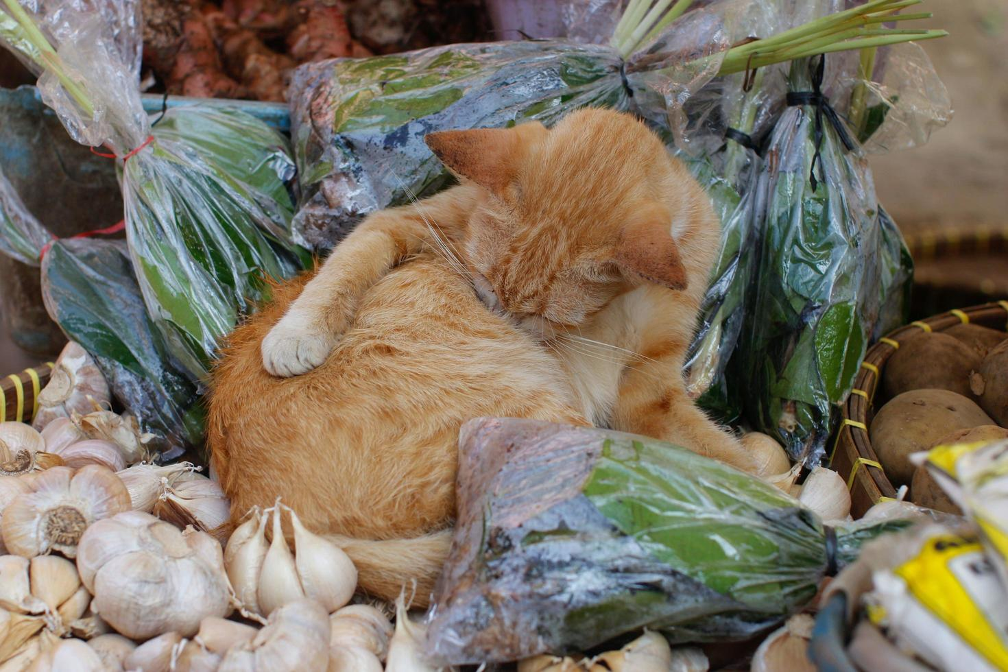 chat errant portant dans une échoppe de marché local photo