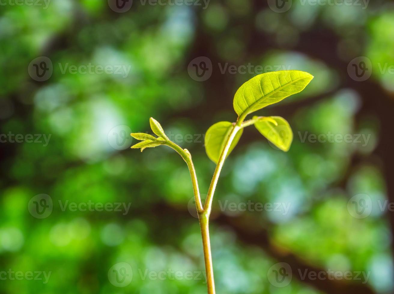 Feuilles de bourgeons de jeunes plantes ensemencement en forêt photo