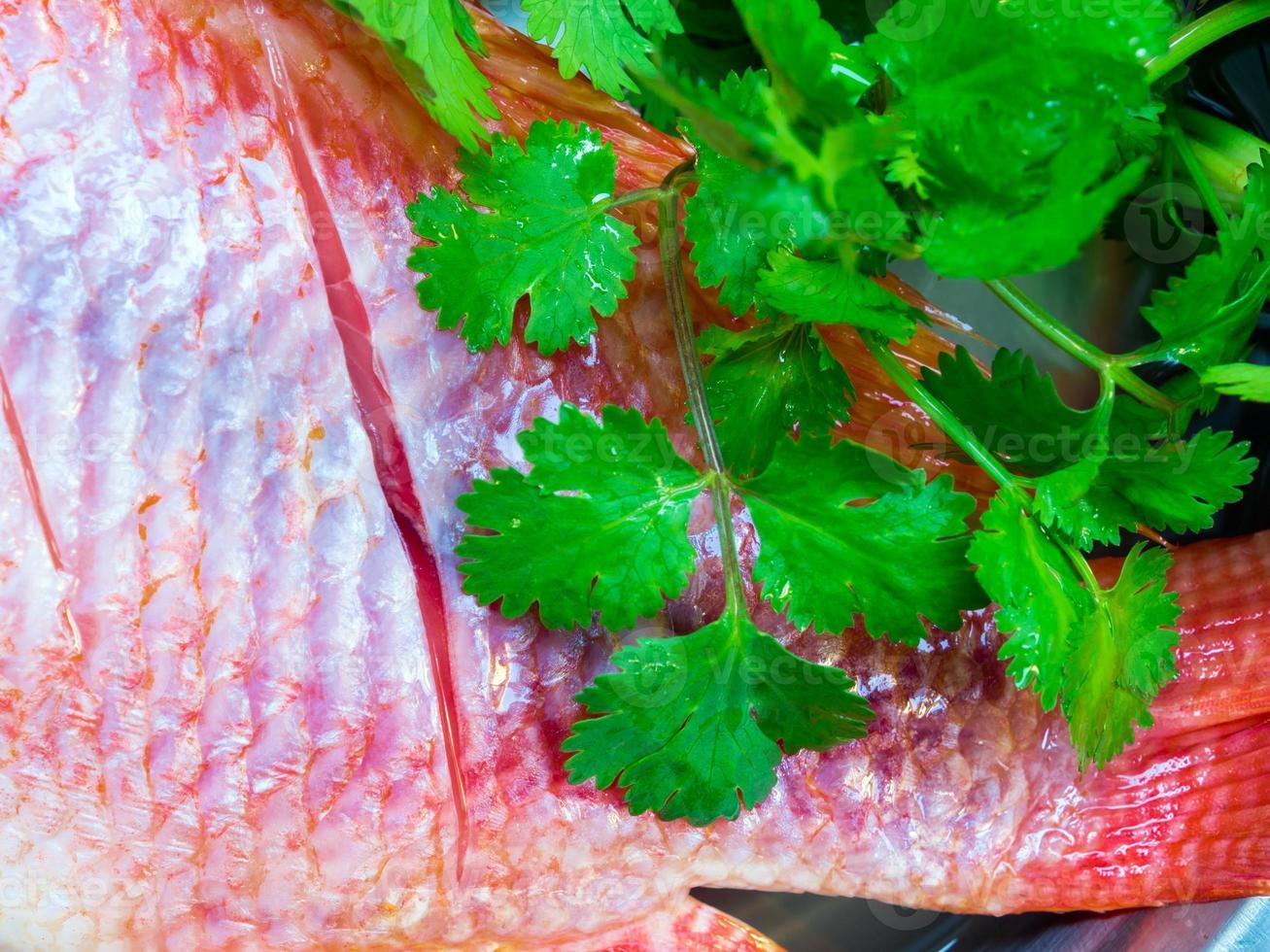 les poissons frais sont congelés préparez-vous à la cuisson photo